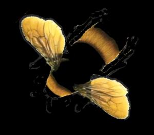 GD Bee